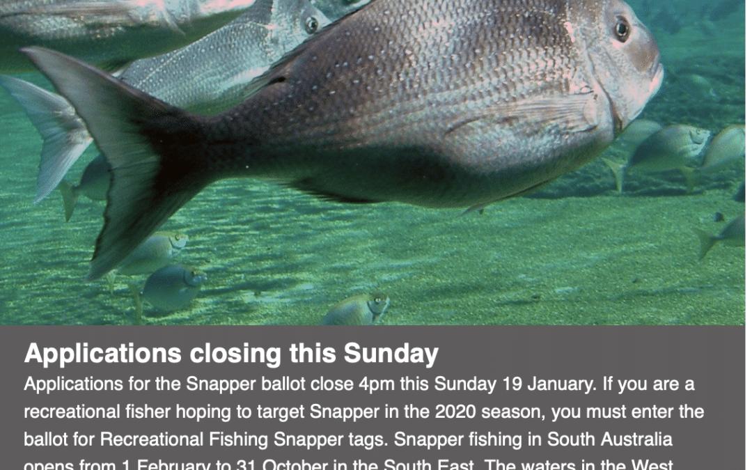 SA Snapper Tag Ballot closes Sunday 19th January at 16:00