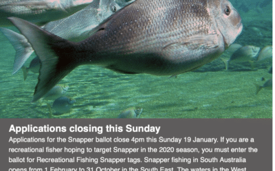 SA Snapper Tag Ballot closes Sunday 19th January at 16:00